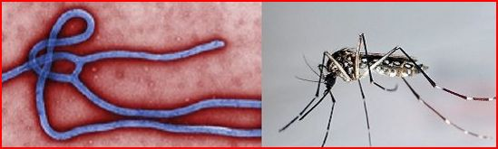 dengue16